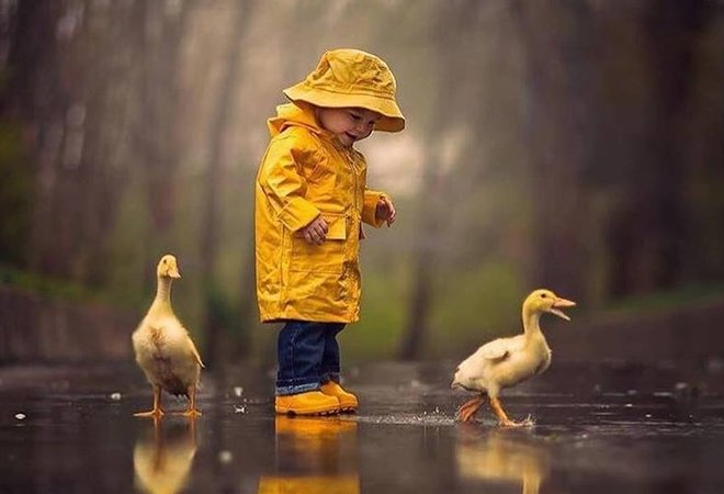 Little boy playing with ducks in the rain