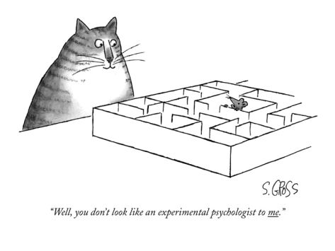 "Mouse in a maze and talking to cat: ""Well, you don't look like an experimental psychologist to me."""